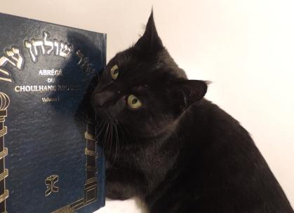 Mon chat lisant le Shoulan Haroukh